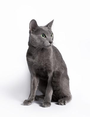 těsné kočička velké tituly