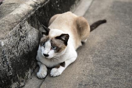čerstvý 18 kočička