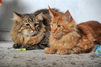 velká a pevná kočička eben keňa porno