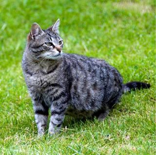 Tlusté černé chlupaté kočičky