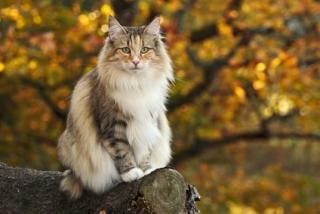 Nahé chlupaté kočička dospívající