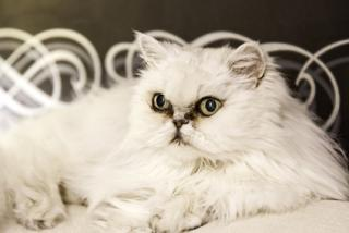 hladké těsné kočičkasex s japonským zralým