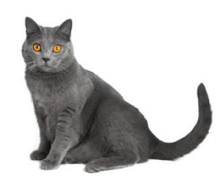Divoká kočička stříkat